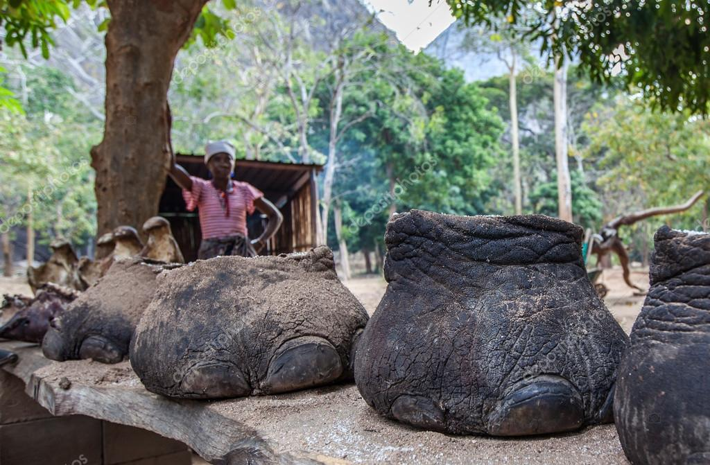 Editorial Who Is Looking Out For These >> Ranger Is Looking At The Feet Of Elephants Stock Editorial Photo