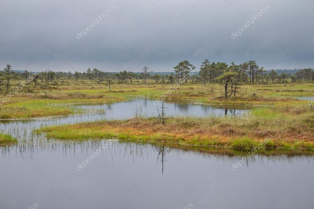 Bog landscape of Estonia