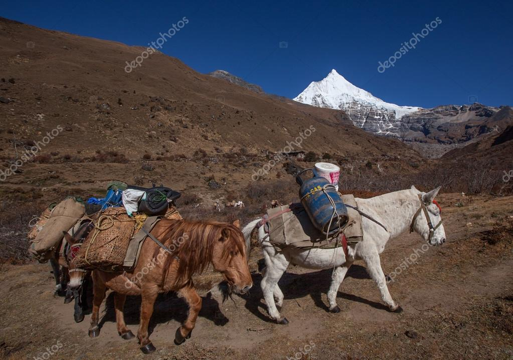 ponies moving on mountain path