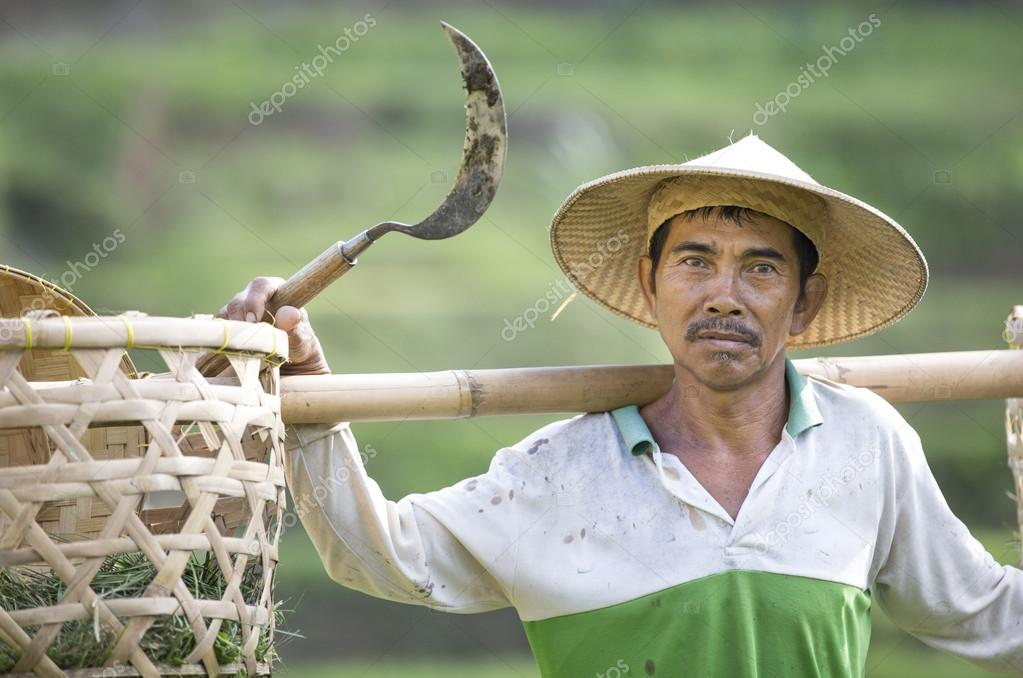 rice farmer on a field in Bali