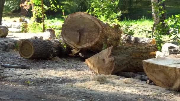 v lese z pokácených stromů, polena a palivové dřevo