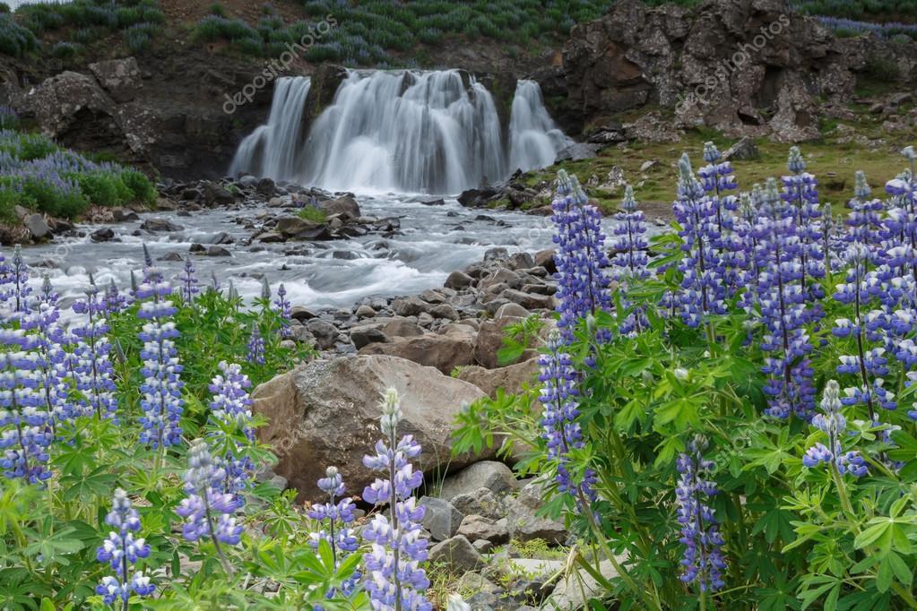 Waterfall Fossarrett with lupine