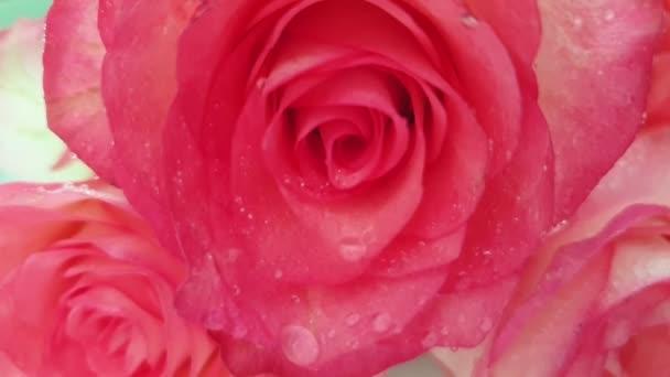rózsa víz spray lassított felvétel