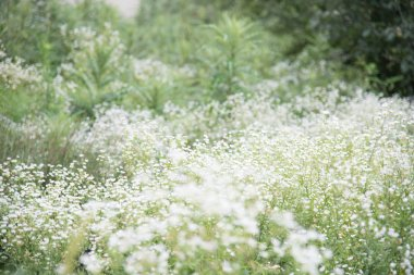 Photo of white flower meadow