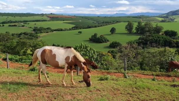 Nutztiere fressen Gras in einer wunderschönen Berglandschaft des Bundesstaates Minas Gerais, Brasilien.