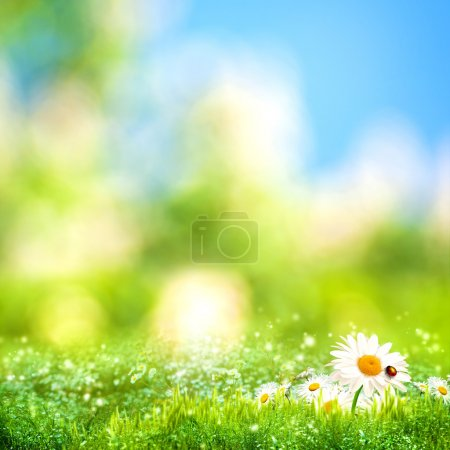 Beautiful meadow background