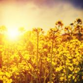 Wild flowers under bright sun