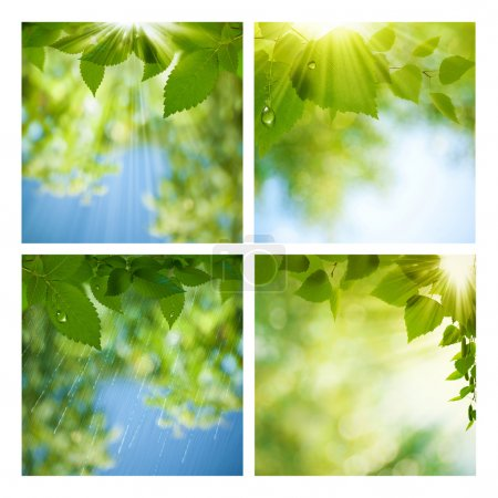Photo for Set of assorted summer seasonal backgrounds for your design - Royalty Free Image