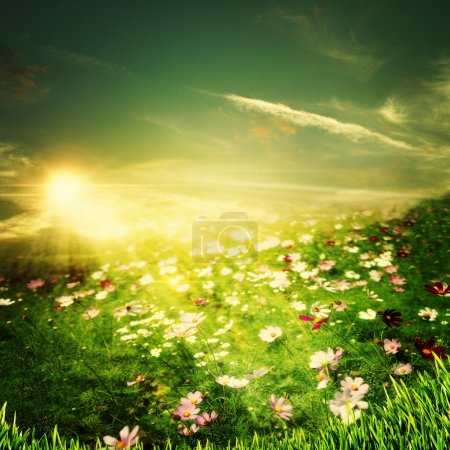 Photo for Beauty summer evening on the farm, environmental backgrounds - Royalty Free Image