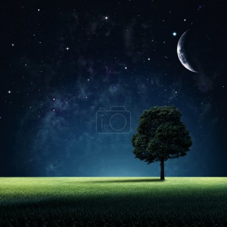 Moon over tree at night