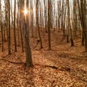 Autumnal forest background