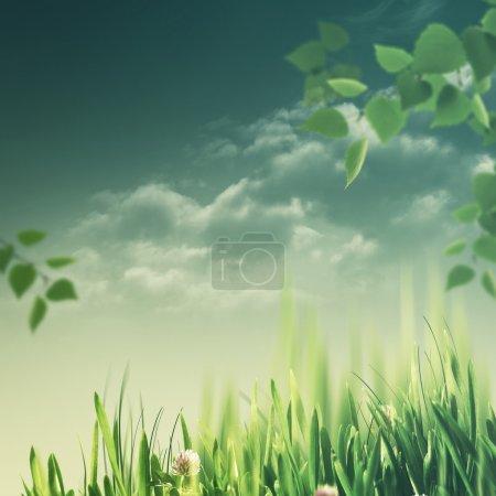 Photo pour L'été vert feuillage et herbe fond naturel - image libre de droit