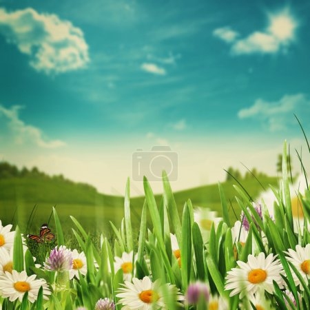 Beautiful meadow with flowers and green grass