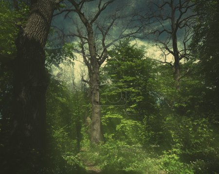 Photo for Magic green forest, seasonal background - Royalty Free Image