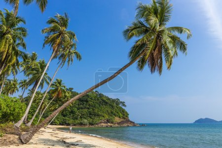 Coconut palm on a tropical beach
