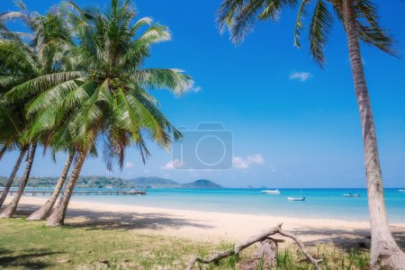 Coconut palms on tropical beach