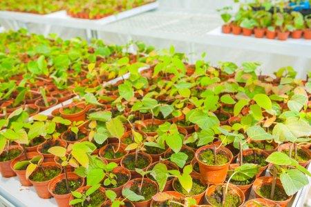 Small seedlings