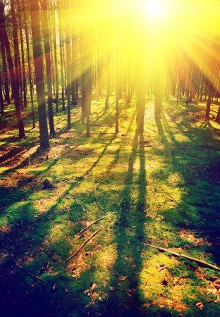 beautiful sunrise in pinetree forest instagram stile