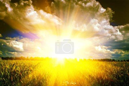 Photo pour Beau lever de soleil sur champ de blé instagram style - image libre de droit