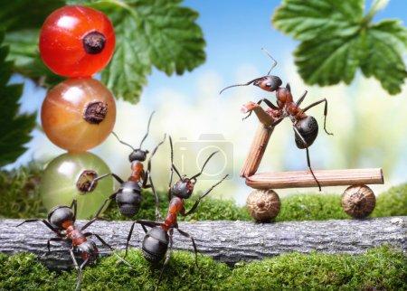 look out, bicycle loosing brake, ant tales