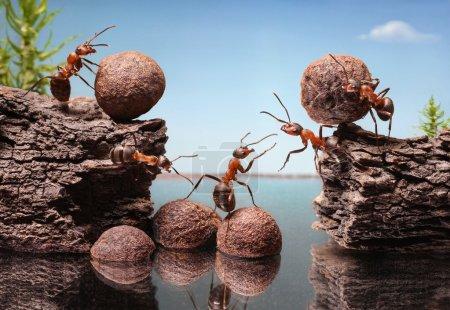 Photo pour Équipe de travail de fourmis construction barrage, travail d'équipe - image libre de droit