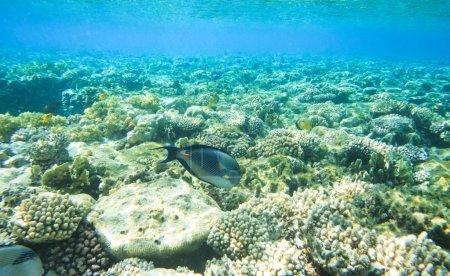 Tranquil underwater scene