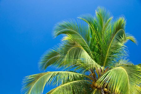 Photo for Palm trees against blue sky. Palm trees at tropical coast - Royalty Free Image