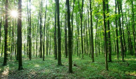 Photo for Forest trees. nature green wood sunlight backgrounds - Royalty Free Image