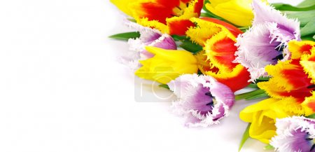 Photo for Bouquet of the fresh tulips on white background - Royalty Free Image