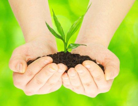 Photo pour Plante dans les mains féminines sur fond vert - image libre de droit