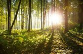 Sunlight in forest with trees