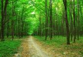 Forest trees in green wood