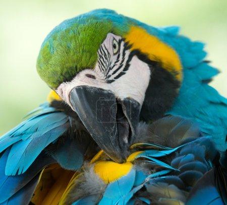 Parrot bird sitting