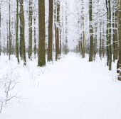 Winter forest  and  road
