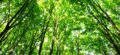 Nature green wood