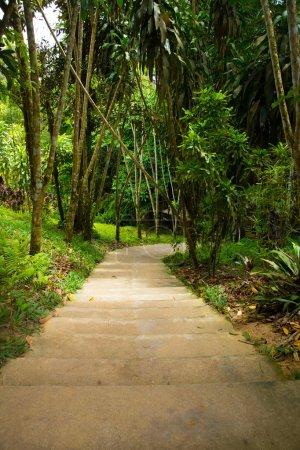 Photo pour Chemin de pierre de jardin avec herbe - image libre de droit