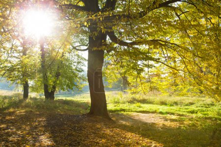 Foto de Hermosa luz del sol en el bosque del otoño - Imagen libre de derechos