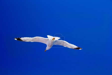 Seagull flies against  sky