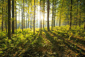 Forest  trees background