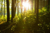 green forest trees at sunrise