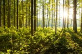 forest trees. nature green wood background