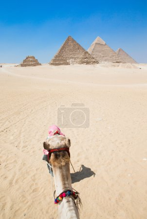 Head of camel and pyramids,