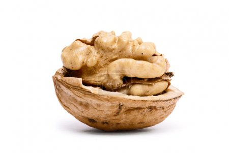 Half of open walnut
