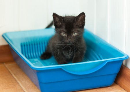 The black kitten goes to the toilet in the tray...