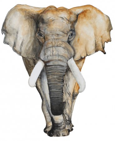 Watercolor hand drawn Elephant