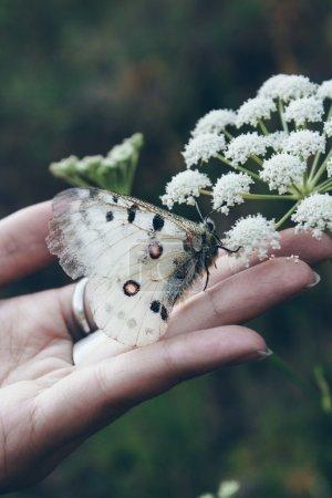 Photo pour Beau papillon blanc perché sur la main et la paume tendue d'une femme sur un fond sombre - image libre de droit