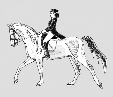 Woman rider on  horse