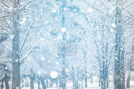 Photo pour Beau paysage hivernal avec des arbres enneigés - image libre de droit