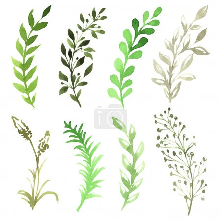 Illustration for Vector Set of flowers painted in watercolor on white paper. Sketch of flowers and herbs - Royalty Free Image