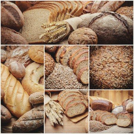 The Freshness Bread